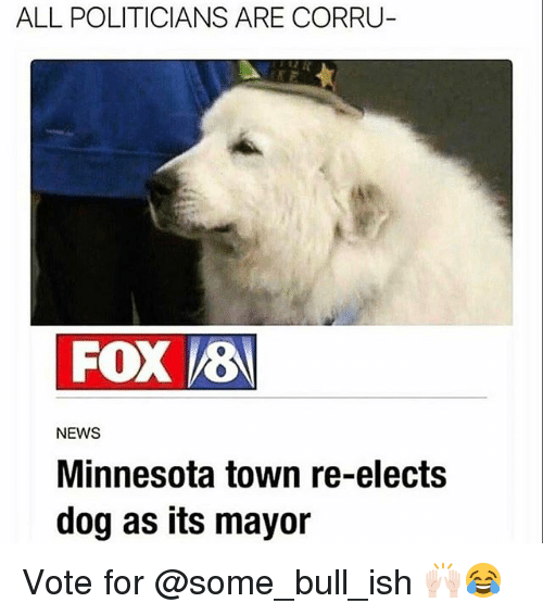 Funny, News, and Minnesota: ALL POLITICIANS ARE CORRU  FOX VEN  NEWS  Minnesota town re-elects  dog as its mayor Vote for @some_bull_ish 🙌🏻😂