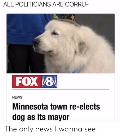 mayor: ALL POLITICIANS ARE CORRU  NEWS  Minnesota town re-elects  dog as its mayor The only news I wanna see.