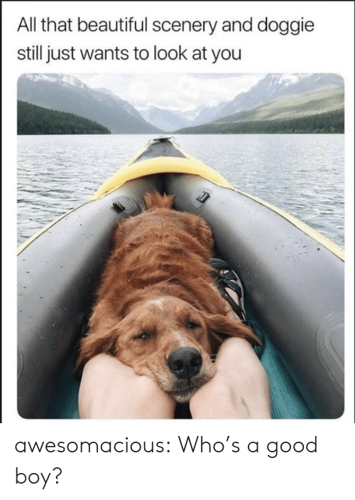 Whos A Good Boy: All that beautiful scenery and doggie  still just wants to look at you awesomacious:  Who's a good boy?
