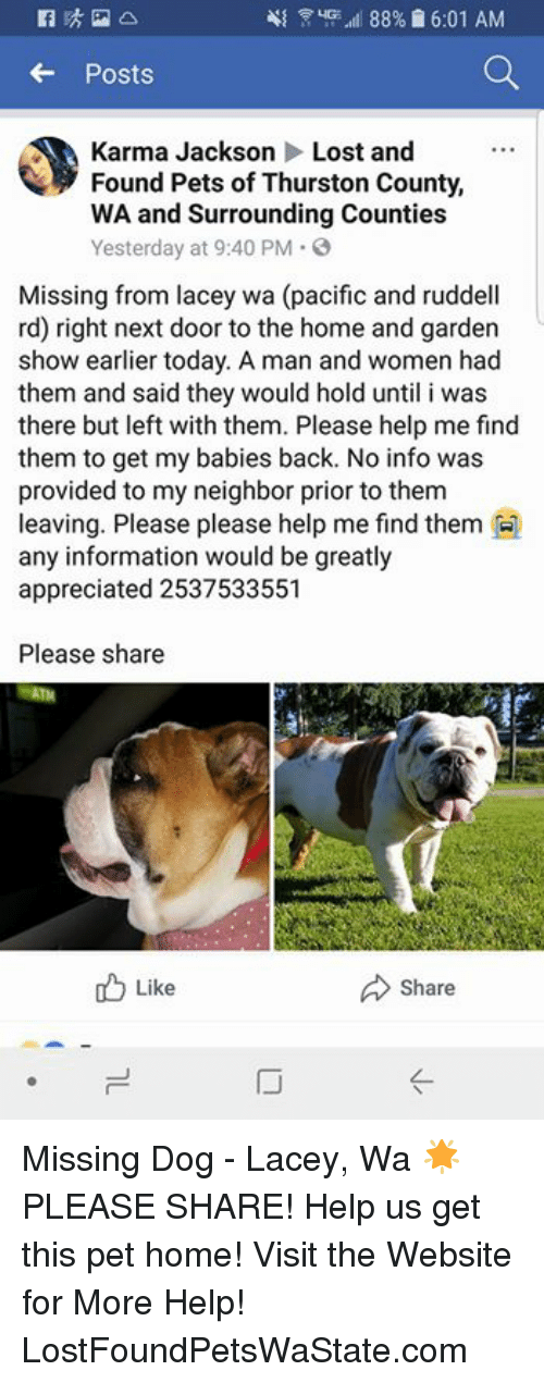 Memes, Yo, and Lost: all ,yo 111 88%  6:01 AM  Posts  Karma Jackson Lost and  Found Pets of Thurston County,  WA and Surrounding Counties  Yesterday at 9:40 PM。)  Missing from lacey wa (pacific and ruddell  rd) right next door to the home and garden  show earlier today. A man and women had  them and said they would hold until i was  there but left with them. Please help me find  them to get my babies back. No info was  provided to my neighbor prior to them  leaving. Please please help me find them  any information would be greatly  appreciated 2537533551  Please share  Like  Share  ㄩ Missing Dog - Lacey, Wa  🌟PLEASE SHARE! Help us get this pet home!  Visit the Website for More Help! LostFoundPetsWaState.com