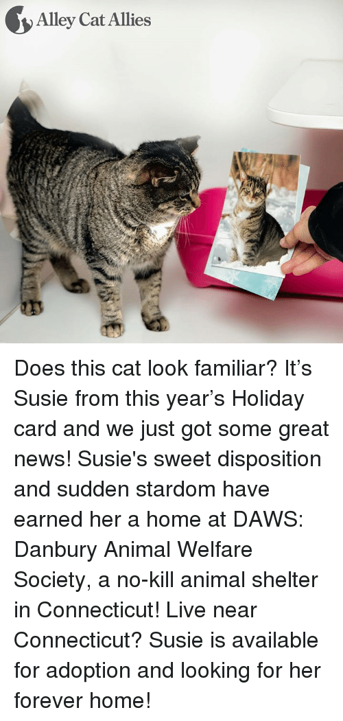 Memes, Ally, and Animal Shelter: Alley Cat Allies Does this cat look familiar? It's Susie from this year's Holiday card and we just got some great news! Susie's sweet disposition and sudden stardom have earned her a home at DAWS: Danbury Animal Welfare Society, a no-kill animal shelter in Connecticut!   Live near Connecticut? Susie is available for adoption and looking for her forever home!
