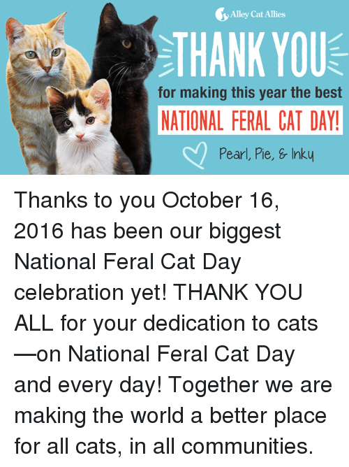 Cats, Community, and Memes: Alley Cat Allies  THANK YOU  for making this year the best  NATIONAL FERAL CAT DAY!  Pearl, Pie, & Inky Thanks to you October 16, 2016 has been our biggest National Feral Cat Day celebration yet! THANK YOU ALL for your dedication to cats—on National Feral Cat Day and every day! Together we are making the world a better place for all cats, in all communities.