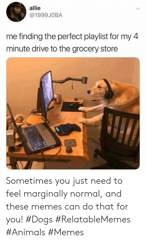 allie: allie  @1999JOBA  me finding the perfect playlist for my 4  minute drive to the grocery store Sometimes you just need to feel marginally normal, and these memes can do that for you! #Dogs #RelatableMemes #Animals #Memes