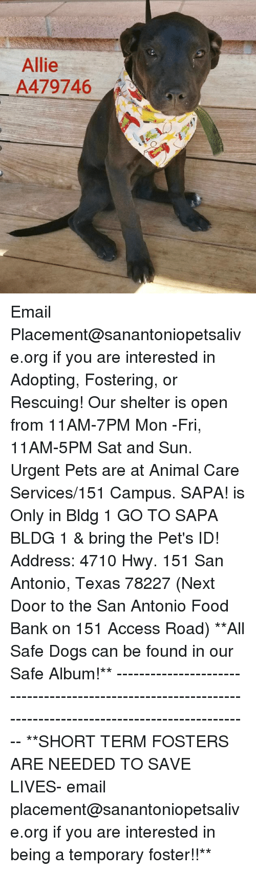 Dogs, Food, and Memes: Allie  A479746 Email Placement@sanantoniopetsalive.org if you are interested in Adopting, Fostering, or Rescuing!  Our shelter is open from 11AM-7PM Mon -Fri, 11AM-5PM Sat and Sun.  Urgent Pets are at Animal Care Services/151 Campus. SAPA! is Only in Bldg 1 GO TO SAPA BLDG 1 & bring the Pet's ID! Address: 4710 Hwy. 151 San Antonio, Texas 78227 (Next Door to the San Antonio Food Bank on 151 Access Road)  **All Safe Dogs can be found in our Safe Album!** ---------------------------------------------------------------------------------------------------------- **SHORT TERM FOSTERS ARE NEEDED TO SAVE LIVES- email placement@sanantoniopetsalive.org if you are interested in being a temporary foster!!**