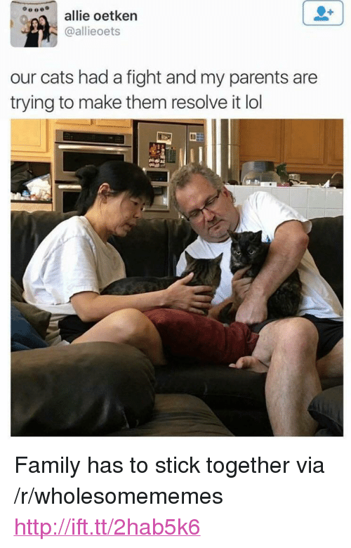 """Stick Together: allie oetkern  @allieoets  our cats had a fight and my parents are  trying to make them resolve it lol <p>Family has to stick together via /r/wholesomememes <a href=""""http://ift.tt/2hab5k6"""">http://ift.tt/2hab5k6</a></p>"""