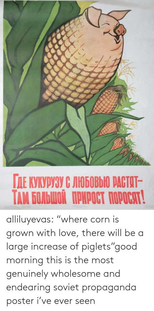 "morning: alliluyevas:  ""where corn is grown with love, there will be a large increase of piglets""good morning this is the most genuinely wholesome and endearing soviet propaganda poster i've ever seen"