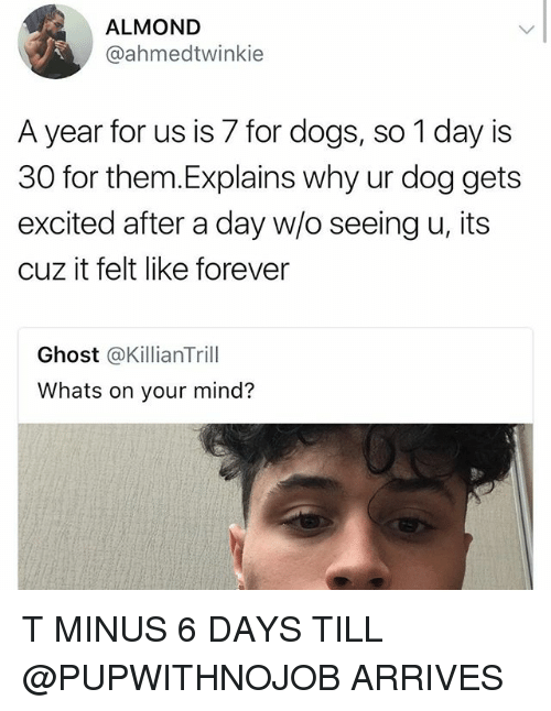 Dogs, Forever, and Ghost: ALMOND  @ahmedtwinkie  A year for us is 7 for dogs, so 1 day is  30 for them.Explains why ur dog gets  excited after a day w/o seeing u, its  cuz it felt like forever  Ghost @KillianTrill  Whats on your mind? T MINUS 6 DAYS TILL @PUPWITHNOJOB ARRIVES