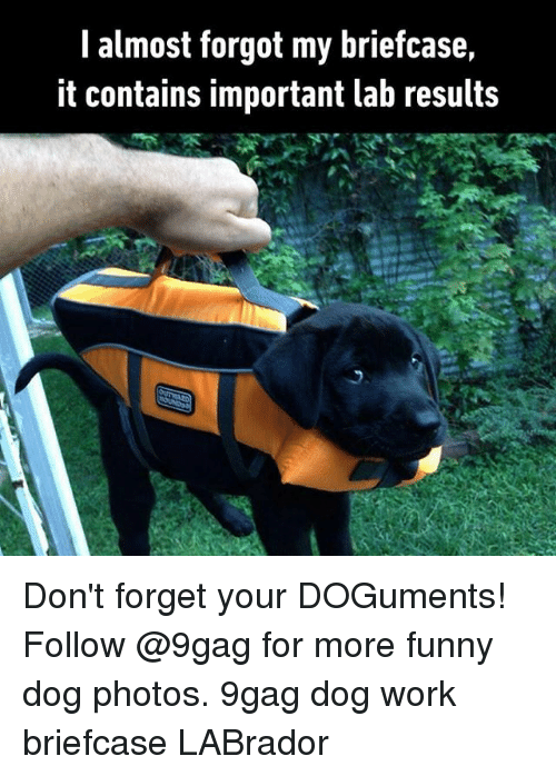 9gag, Funny, and Memes: almost forgot my briefcase  it contains important lab results Don't forget your DOGuments! Follow @9gag for more funny dog photos. 9gag dog work briefcase LABrador