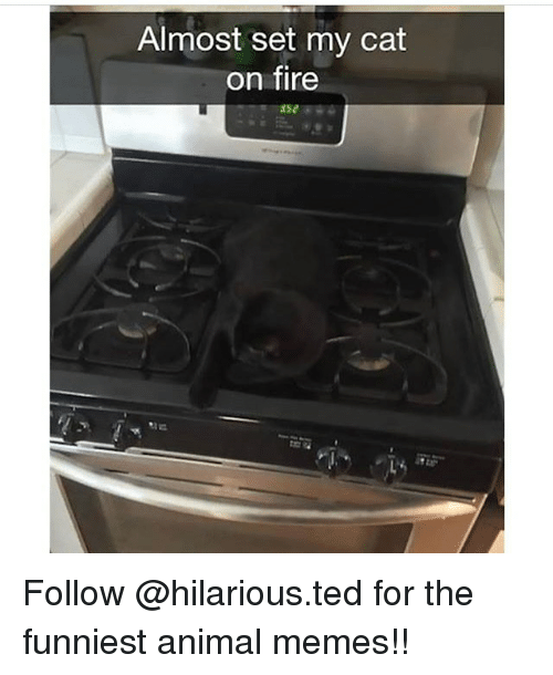 Animated Memes: Almost set my cat  on fire Follow @hilarious.ted for the funniest animal memes!!