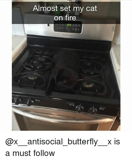 Fire, Memes, and Butterfly: Almost set my cat  on fire @x__antisocial_butterfly__x is a must follow