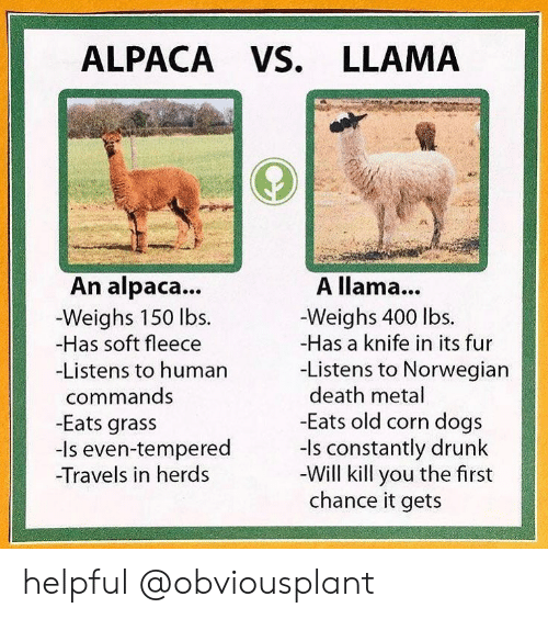 Norwegian: ALPACA VS. LLAMA  An alpaca...  -Weighs 150 lbs.  -Has soft fleece  Listens to humarn  commands  -Eats grass  -Is even-tempered  Travels in herds  A llama...  -Weighs 400 lbs.  -Has a knife in its fur  -Listens to Norwegian  death metal  Eats old corn dogs  -Is constantly drunk  -Will kill you the first  chance it gets helpful @obviousplant