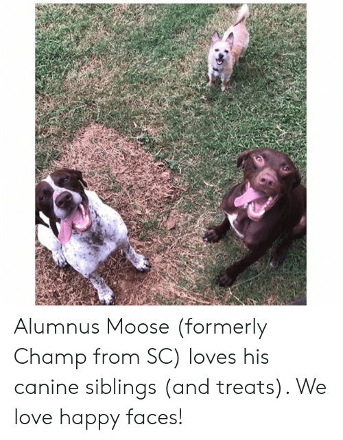 happy faces: Alumnus Moose (formerly Champ from SC) loves his canine siblings (and treats).  We love happy faces!