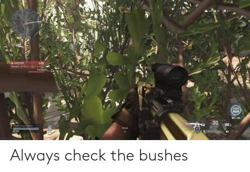 bushes: Always check the bushes