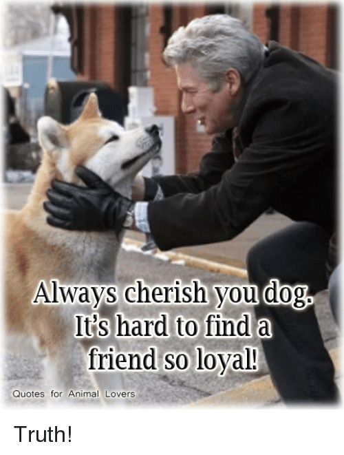 animal lover: Always cherish you dog  It's hard to find a  friend SO loyal!  Quotes for Animal Lovers Truth!