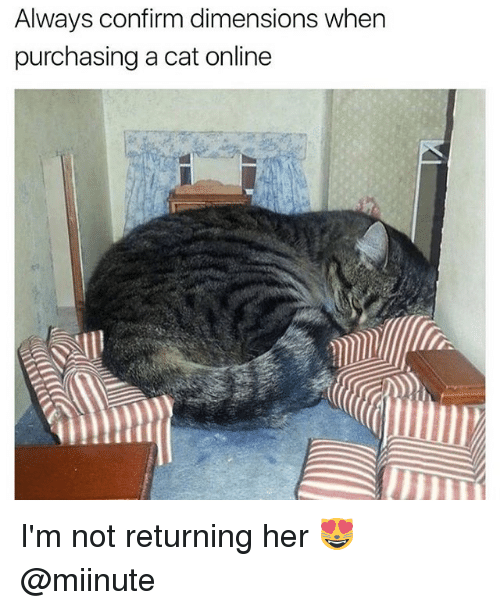Memes, 🤖, and Her: Always confirm dimensions when  purchasing a cat online I'm not returning her 😻 @miinute