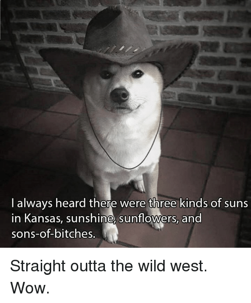 Sunflowering: always heard there were three kinds of suns  in Kansas, sunshine sunflowers, and  sons-of-bitches. Straight outta the wild west. Wow.