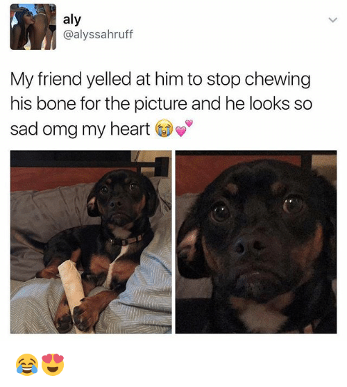 boned: aly  @alyssahruff  My friend yelled at him to stop chewing  his bone for the picture and he looks so  sad omg my heart 😂😍