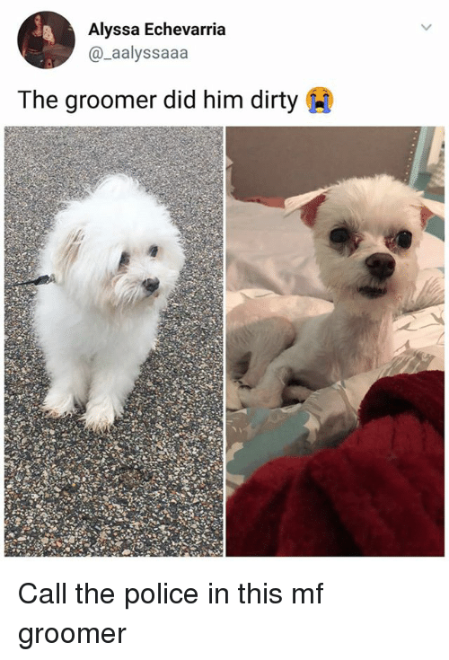 Memes, Police, and Dirty: Alyssa Echevarria  @_aalyssaaa  The groomer did him dirty Call the police in this mf groomer