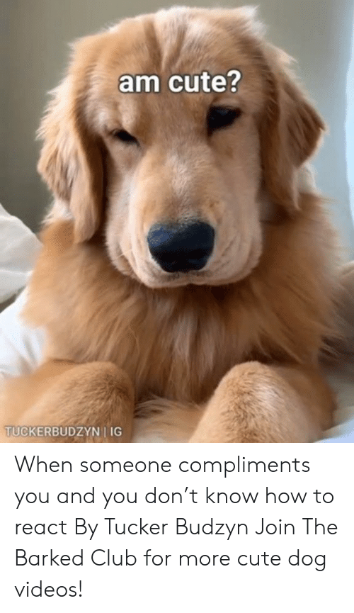 dog videos: am cute?  TUCKERBUDZYN I IG When someone compliments you and you don't know how to react By Tucker Budzyn  Join The Barked Club for more cute dog videos!