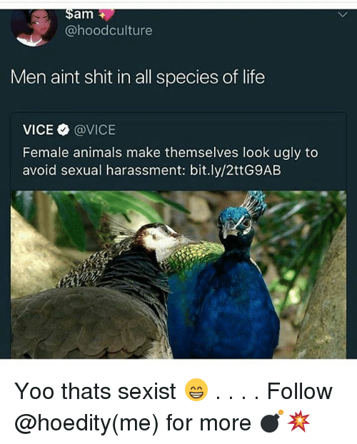 Animals, Life, and Memes: am  @hoodculture  Men aint shit in all species of life  VICE Φ @VICE  Female animals make themselves look ugly to  avoid sexual harassment: bit.ly/2ttG9AB Yoo thats sexist 😁 . . . . Follow @hoedity(me) for more 💣💥