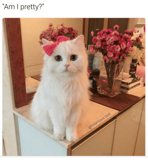 Grumpy Cat, Am I Pretty, and Am I: Am I pretty?