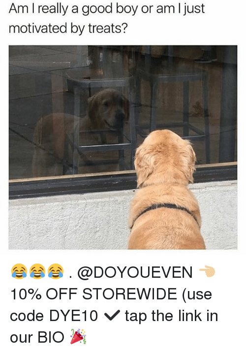 Gym, Good, and Link: Am I really a good boy or am l just  motivated by treats? 😂😂😂 . @DOYOUEVEN 👈🏼 10% OFF STOREWIDE (use code DYE10 ✔️ tap the link in our BIO 🎉
