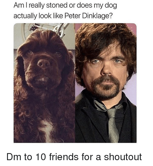 Friends, Memes, and Peter Dinklage: Am I really stoned or does my dog  actually look like Peter Dinklage? Dm to 10 friends for a shoutout