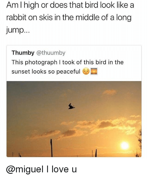 Love, Miguel, and Rabbit: Am l high or does that bird look like a  rabbit on skis in the middle of a long  jump.  Thumby @thuumby  This photograph I took of this bird in the  sunset looks so peaceful @miguel I love u