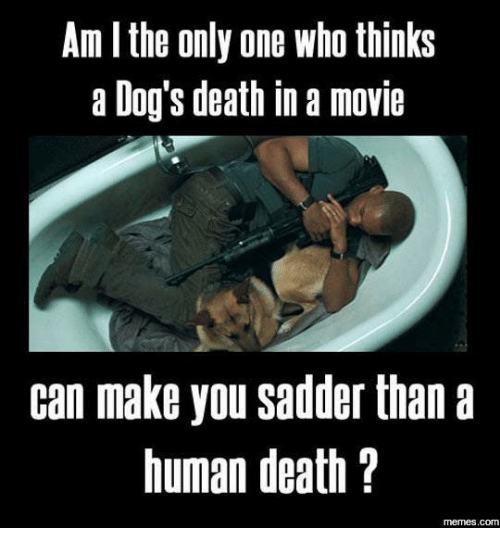 Memes, 🤖, and Death-Meme: Am l the only one Who thinks  a Dog's death in a movie  can make you sadder than a  human death  memes. COM