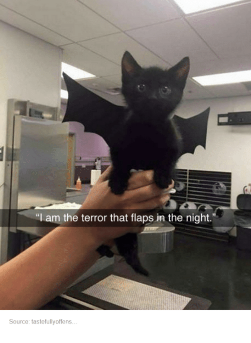 The Terror That Flaps In The Night: am the terror that flaps in the night.  Source: tastefullyoffens.