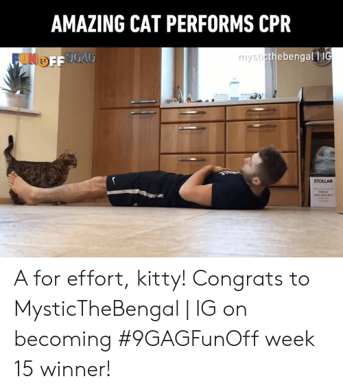 cpr: AMAZING CAT PERFORMS CPR  thebengall IG  STOLLAR A for effort, kitty!  Congrats to MysticTheBengal | IG on becoming #9GAGFunOff week 15 winner!