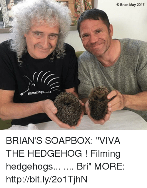 "Memes, Hedgehog, and Http:  #Amazing Grace  Brian May 2017 BRIAN'S SOAPBOX: ""VIVA THE HEDGEHOG ! Filming hedgehogs... .... Bri"" MORE:  http://bit.ly/2o1TjhN"