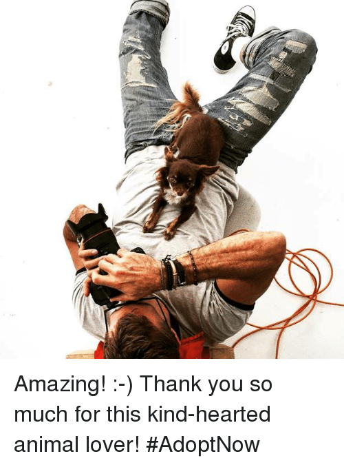 animal lover: Amazing! :-) Thank you so much for this kind-hearted animal lover! #AdoptNow