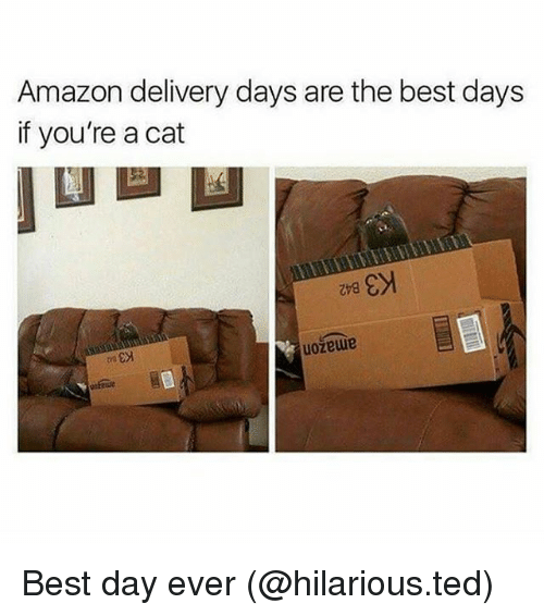 Amazon, Funny, and Ted: Amazon delivery days are the best days  if you're a cat  uozewe Best day ever (@hilarious.ted)
