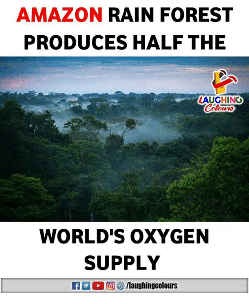 Amazon, Oxygen, and Rain: AMAZON RAIN FOREST  PRODUCES HALF THE  LAUGHINO  WORLD'S OxYGEN  SUPPLY  R 回5/laughingcolours