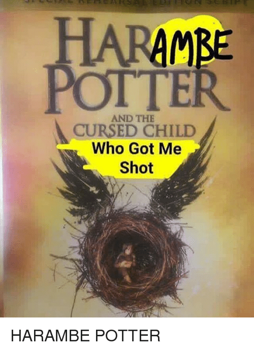 Girl Memes and Harambe: AMBE  POTTER  AND THE  CURSED CHILD  Who Got Me HARAMBE POTTER
