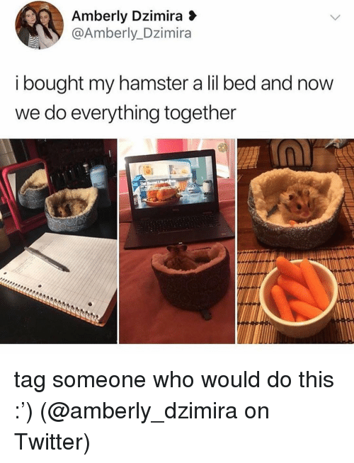 Memes, Twitter, and Hamster: Amberly Dzimira 3  @Amberly_Dzimira  i bought my hamster a lil bed and now  we do everything together tag someone who would do this :') (@amberly_dzimira on Twitter)