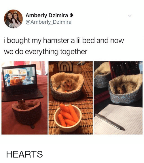 Memes, Hamster, and Hearts: Amberly Dzimira  @Amberly_Dzimira  i bought my hamster a lil bed and now  we do everything together HEARTS