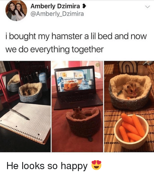 Memes, Hamster, and Happy: Amberly Dzimira  @Amberly_Dzimira  i bought my hamster a lil bed and now  we do everything together He looks so happy 😍