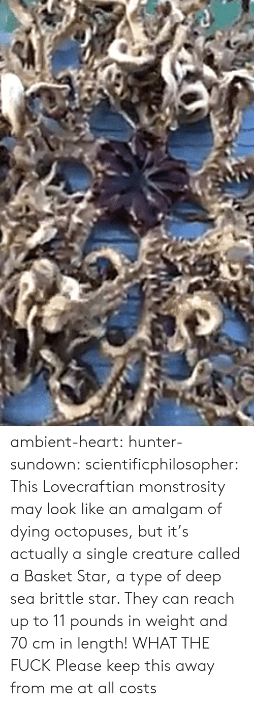 ambient: ambient-heart:  hunter-sundown:  scientificphilosopher: This Lovecraftian monstrosity may look like an amalgam of dying octopuses, but it's actually a single creature called a Basket Star, a type of deep sea brittle star. They can reach up to 11 pounds in weight and 70 cm in length! WHAT THE FUCK   Please keep this away from me at all costs