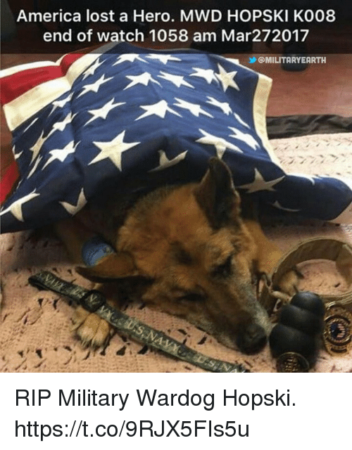 America, Memes, and Lost: America lost a Hero. MWD HOPSKI K008  end of watch 1058 am Mar272017  乡@MILITARYEARTH  2z RIP Military Wardog Hopski. https://t.co/9RJX5FIs5u