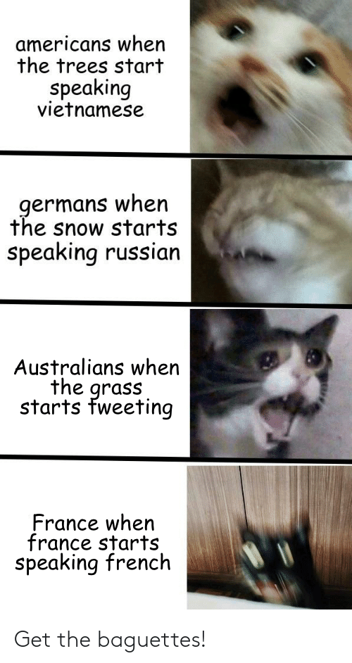 Vietnamese: americans when  the trees start  Speaking  vietnamese  germans when  the snow starts  speaking russian  Australians when  the grass  starts fweeting  France when  france starts  speaking french Get the baguettes!
