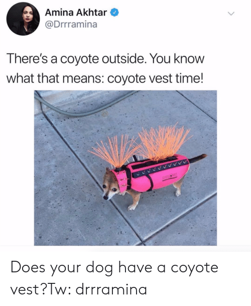 Coyote: Amina Akhtar  @Drrramina  There's a coyote outside. You knovW  what that means: coyote vest time! Does your dog have a coyote vest?Tw: drrramina