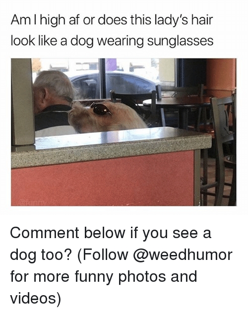 Af, Funny, and Videos: Aml high af or does this lady's hair  look like a dog wearing sunglasses Comment below if you see a dog too? (Follow @weedhumor for more funny photos and videos)