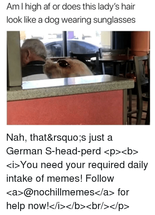 Af, Head, and Memes: Amlhigh af or does this lady's hair  look like a dog wearing sunglasses Nah, that's just a German S-head-perd <p><b><i>You need your required daily intake of memes! Follow <a>@nochillmemes</a> for help now!</i></b><br/></p>