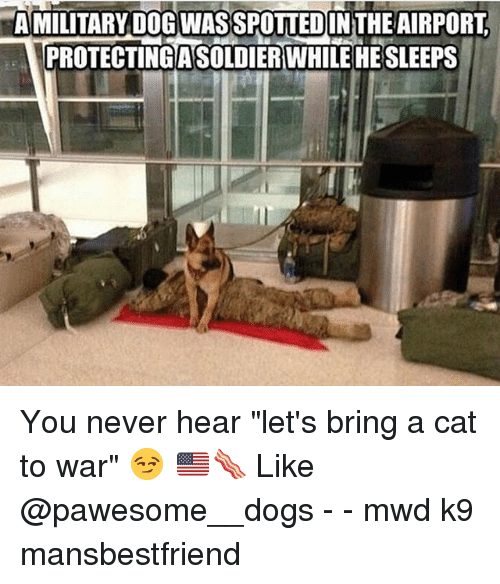 """Dogs, Memes, and Military: AMLITAIRYDIBWISSPDUUED  A MILITARY DOG WASSPOTTEDIN THEAIRPORT  ICROTECTIIDAS ERWILL3HE  PROTECTING ASOLDIERWHILEHE SLEEPS You never hear """"let's bring a cat to war"""" 😏 🇺🇸🥓 Like @pawesome__dogs - - mwd k9 mansbestfriend"""
