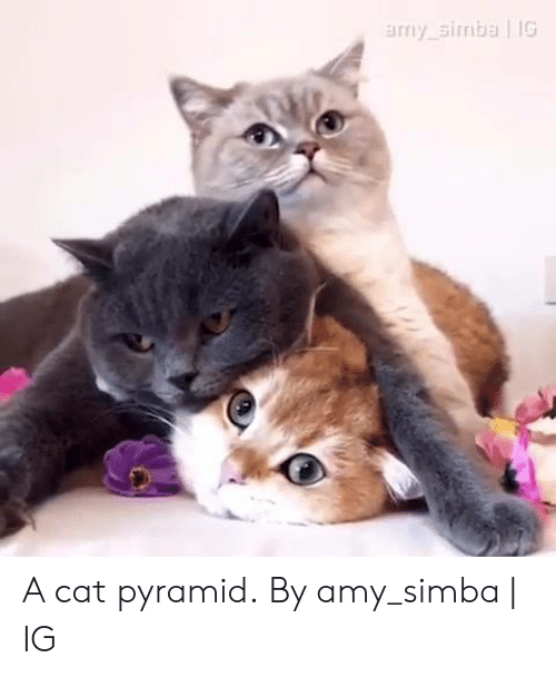 pyramid: amy simba IG A cat pyramid.  By amy_simba | IG