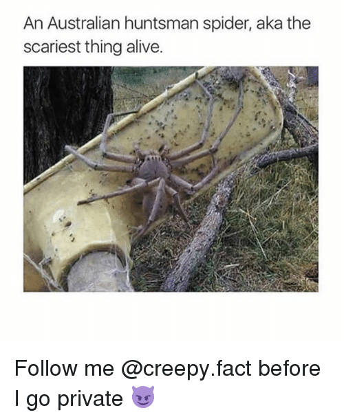 Alive, Creepy, and Memes: An Australian huntsman spider, aka the  scariest thing alive. Follow me @creepy.fact before I go private 😈