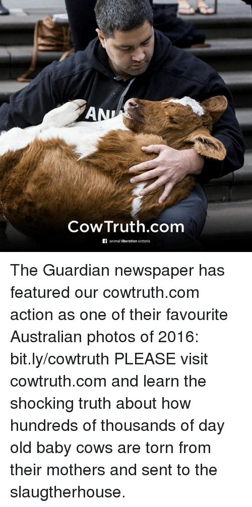 The Shocked: AN  Cow Truth.com  animal liberation victoria The Guardian newspaper has featured our cowtruth.com action as one of their favourite Australian photos of 2016: bit.ly/cowtruth  PLEASE visit cowtruth.com and learn the shocking truth about how hundreds of thousands of day old baby cows are torn from their mothers and sent to the slaugtherhouse.