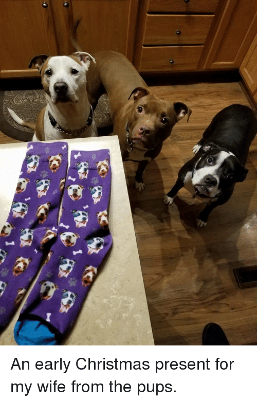 An Early Christmas Present For My Wife From The Pups